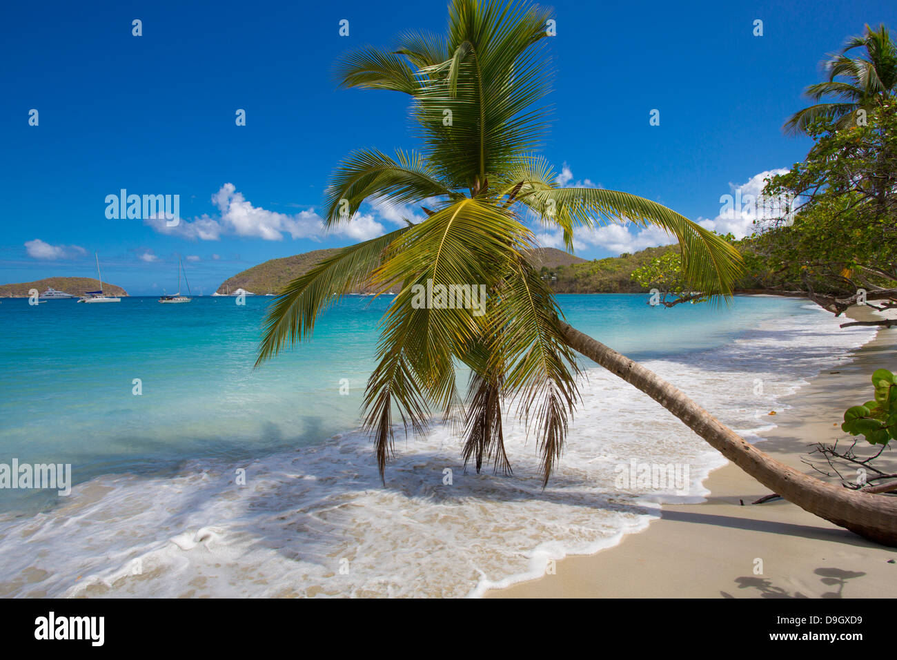 Palm trees on Maho Bay Beach on the Caribbean Island of St John in the US Virgin Islands - Stock Image