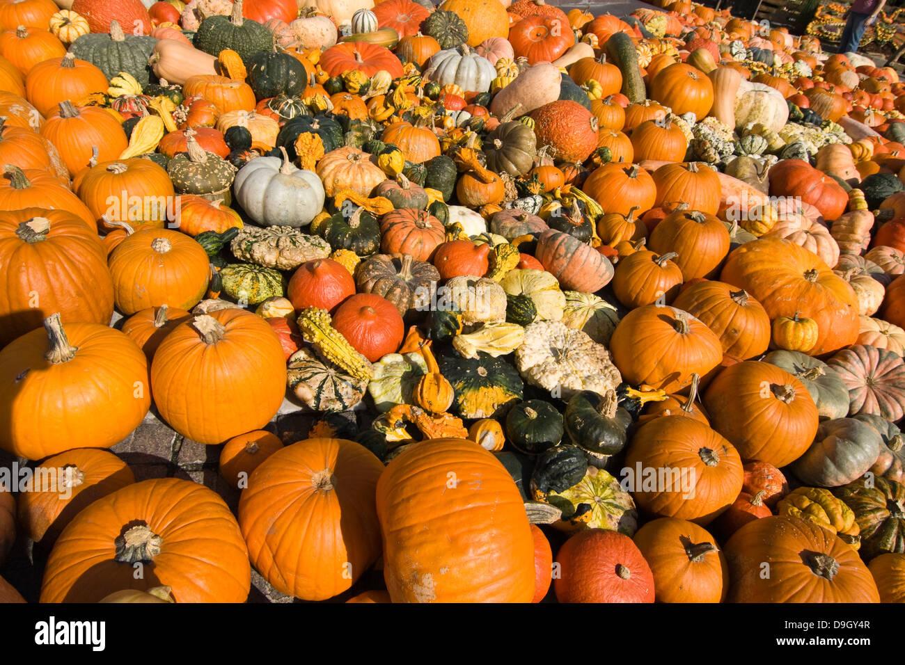 Kürbis-Vielfalt auf einer Kürbis-Schau in Bozen; Variety of pumpkins at a pumpkin festival in Bozen, Italy - Stock Image