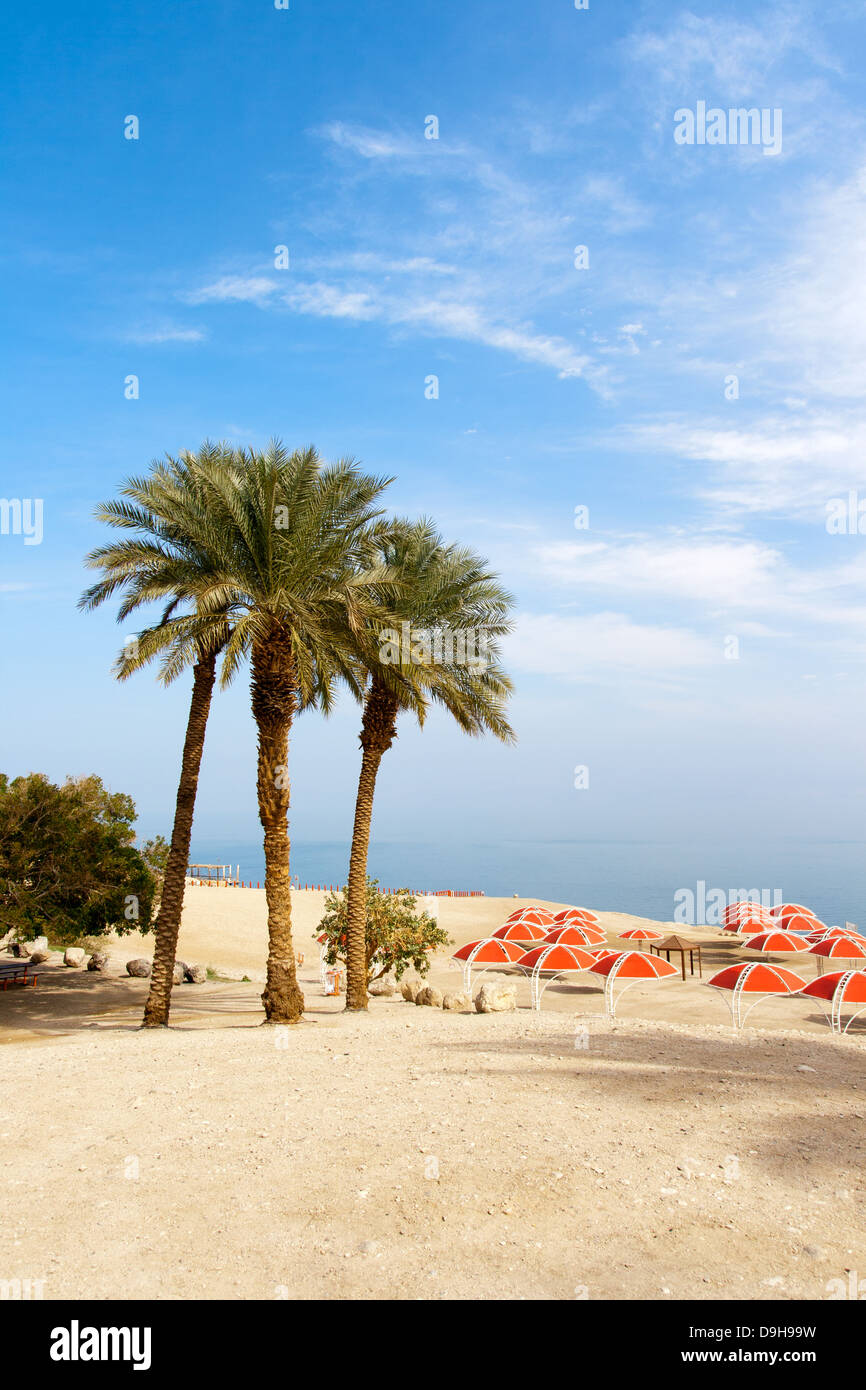 Ein Gedi oasis at the Dead Sea. Israel - Stock Image