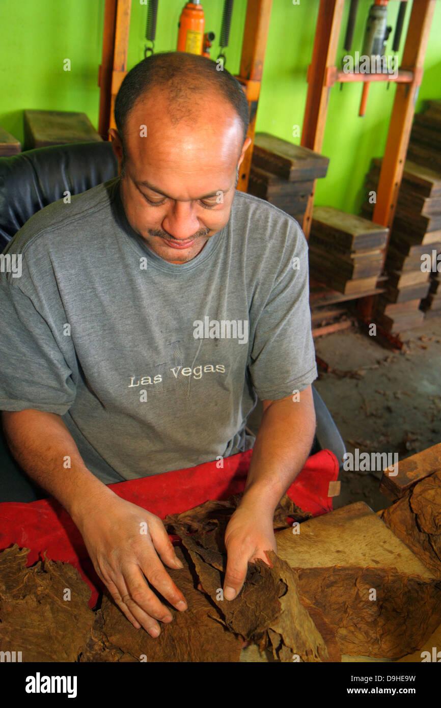 Nevada Las Vegas The Strip South Las Vegas Boulevard Don Pablo Cigar Makers Hispanic man tobacco leaves leaf factory - Stock Image
