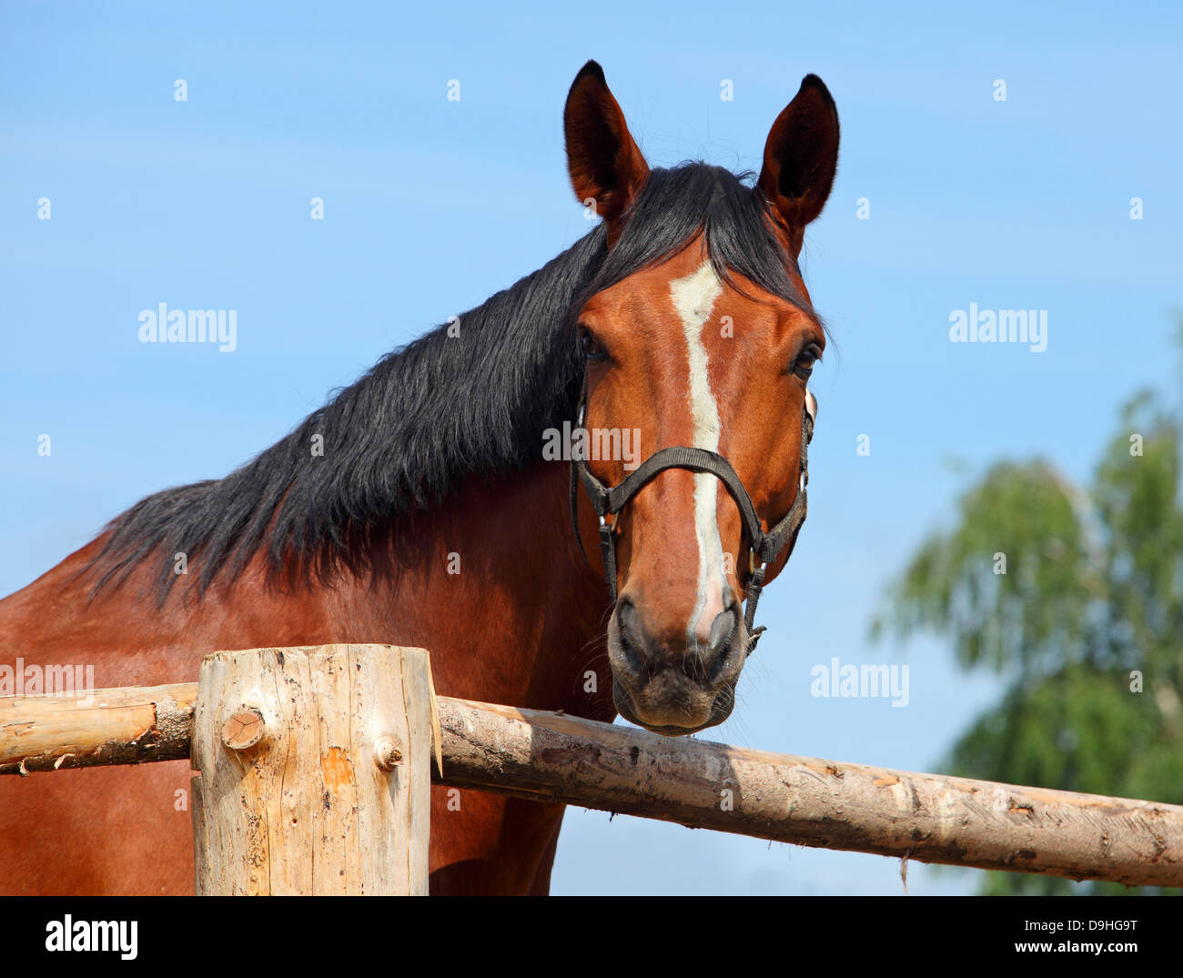 Beautiful horse looking over a wooden fence Stock Photo