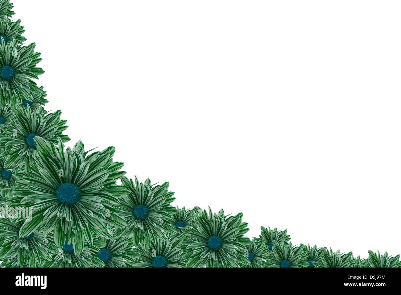 Green chrysanthemum border - Stock Image