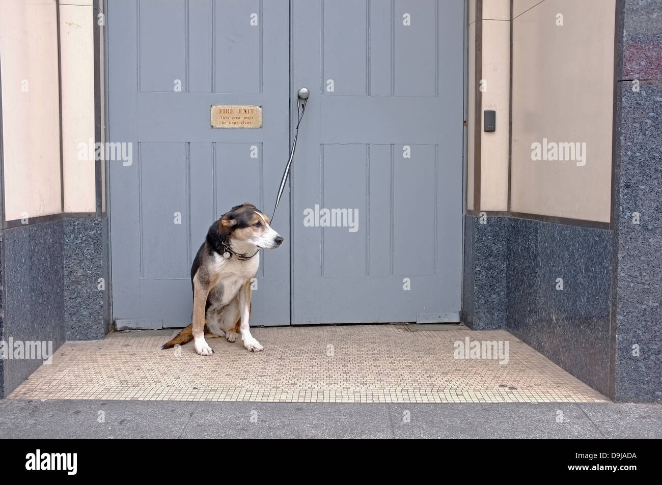 A dog tied to a door waits for it's owner - Stock Image