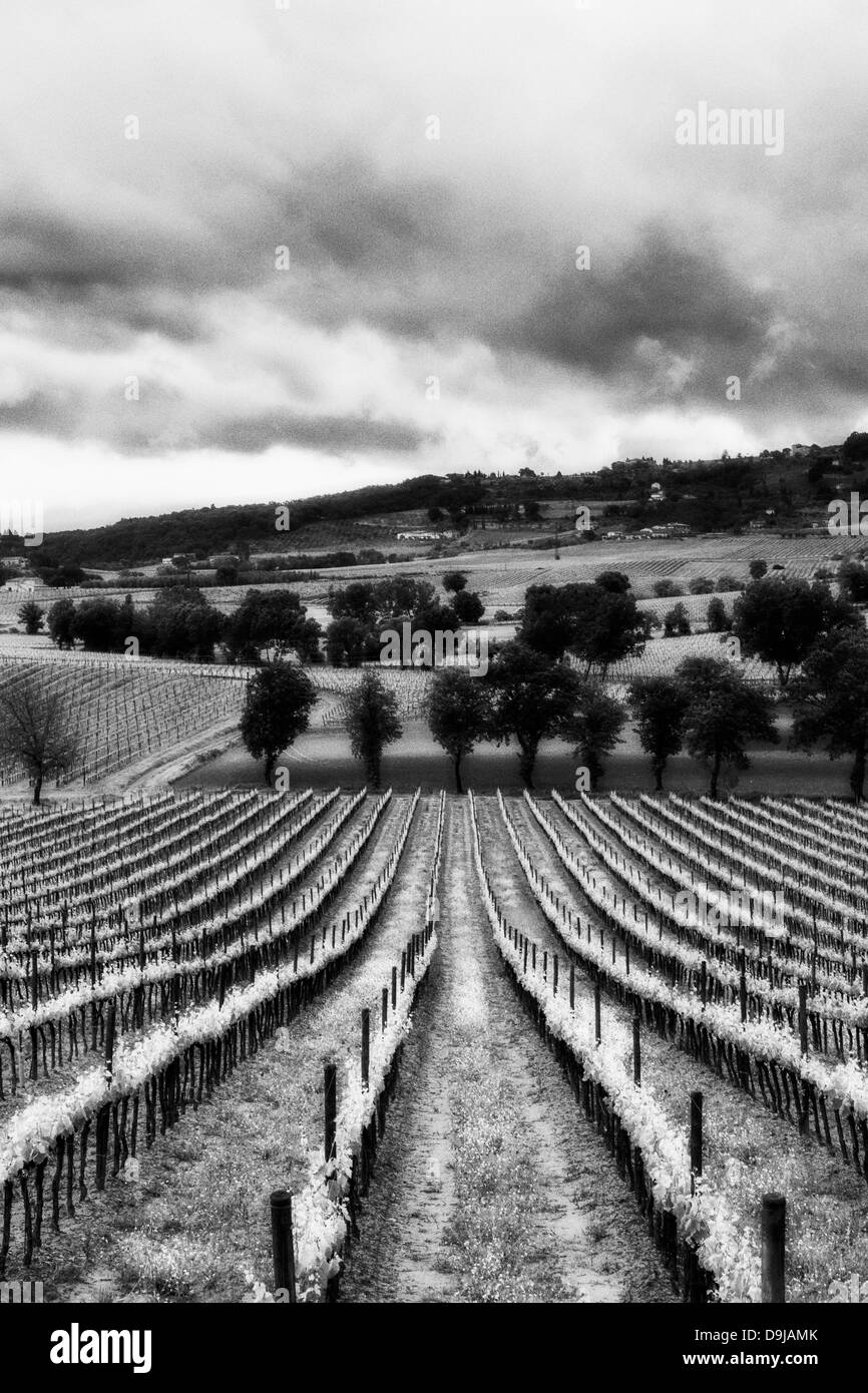 Italian landscape in black and white vineyards in tuscany italy