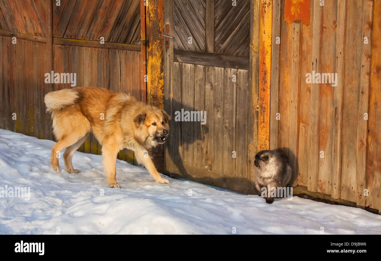 angry dog hunting a scared cat - Stock Image