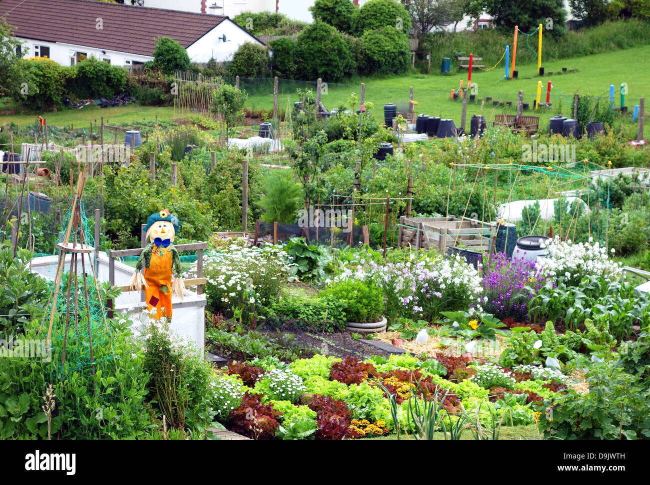 Allotments in an urban area - Stock Image