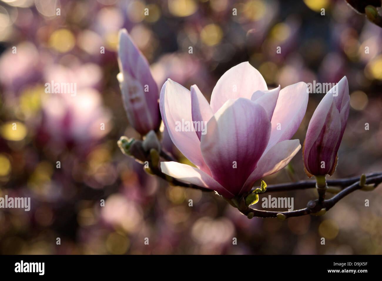Blooms Wiesbaden