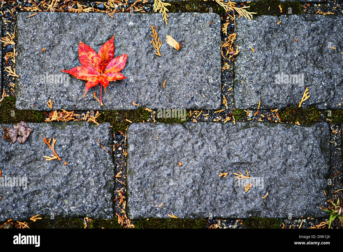 Fall leaf fallen on the floor - Stock Image