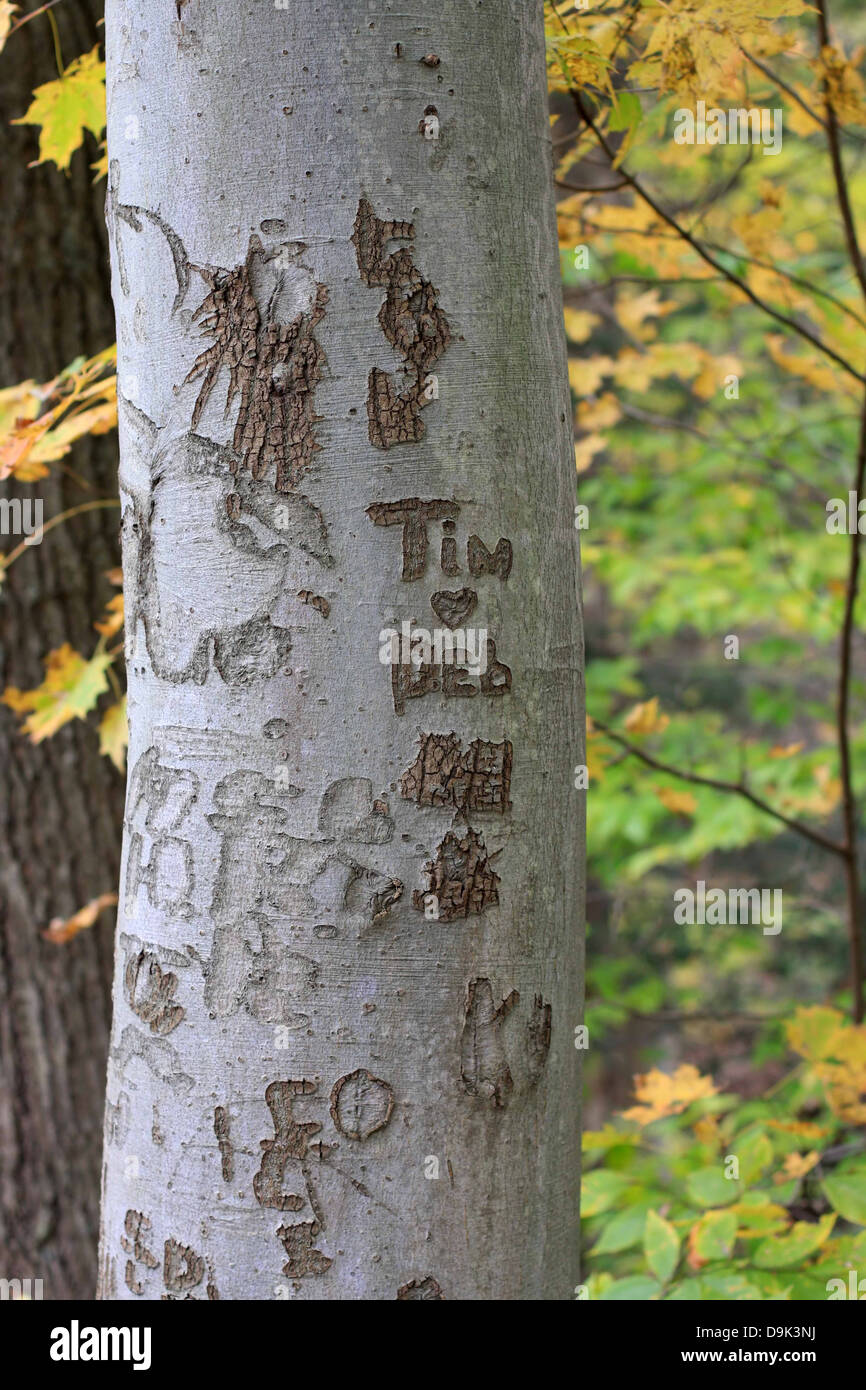 fall autumn leaf leaves tree trunk bark names carve heart love Tim Deb lovers sweethearts branch branches vertical - Stock Image
