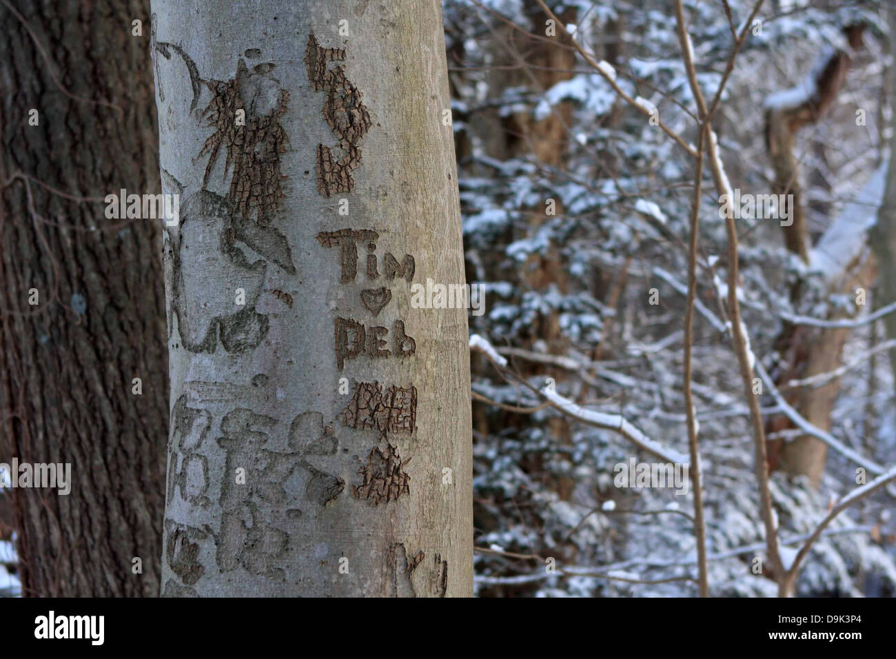 tree trunk bark names carve carved  love old Tim Deb initials heart snow winter branch branches - Stock Image