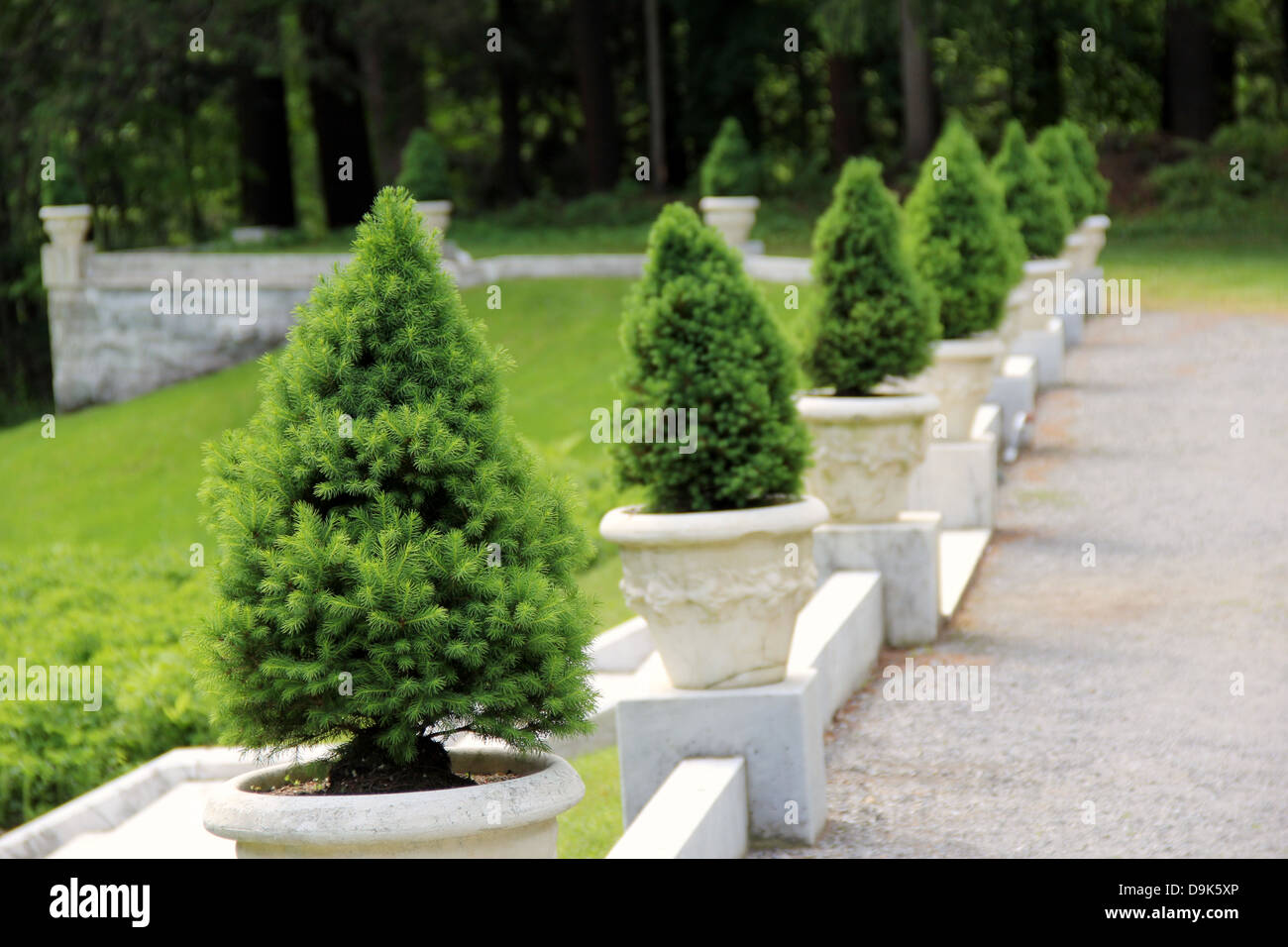 Several Dwarf Pine Trees In Marble Pots Placed In A Neat Line Stock Photo Alamy