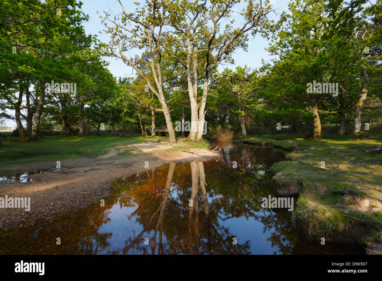 Ober Water. New Forest National Park. Hampshire. England. UK. Stock Photo