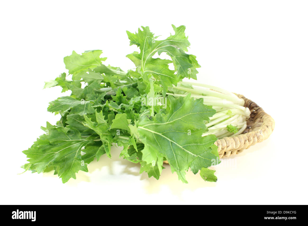fresh Turnip green leafs on a light background Stock Photo