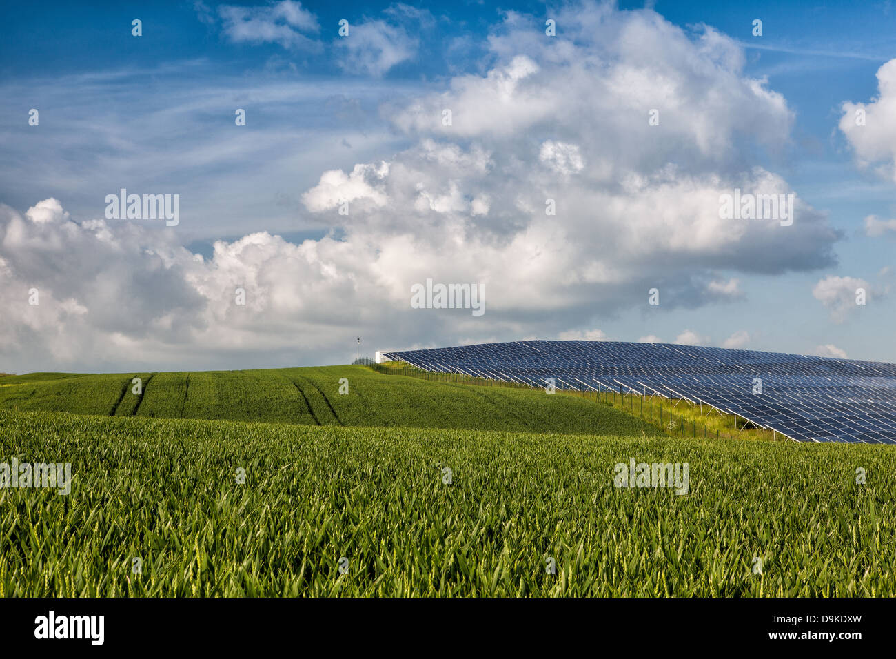 Silicon solar energy panels on green corn field - Stock Image
