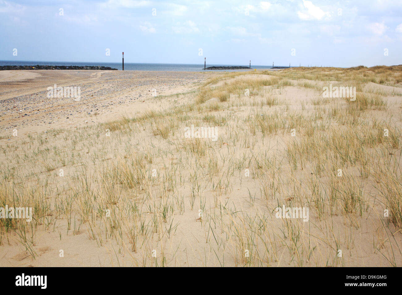 A view of marram grass colonizing the beach and arresting sand at Sea Palling, Norfolk, England, United Kingdom. - Stock Image