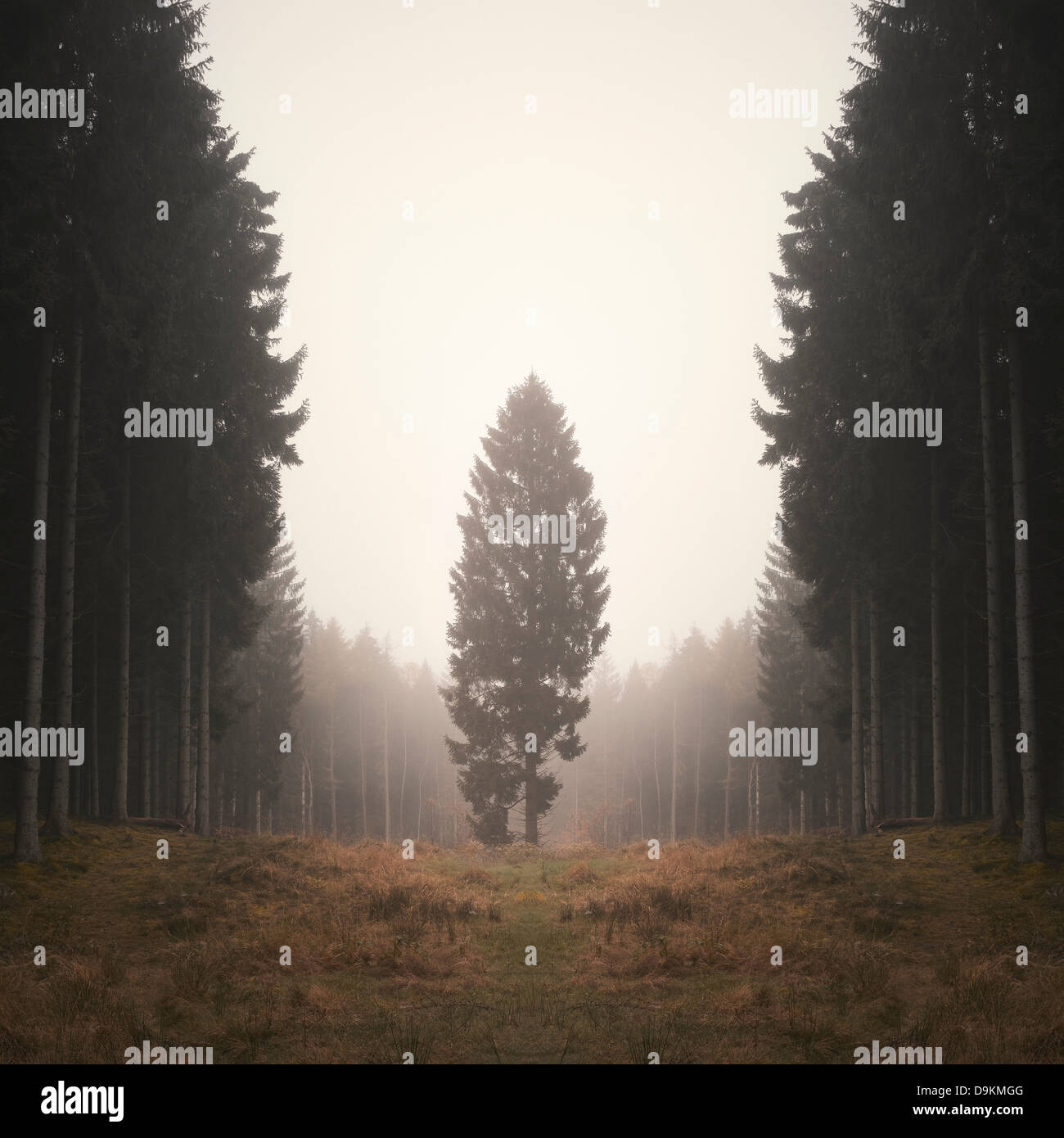 Lone tree in misty forest - Stock Image