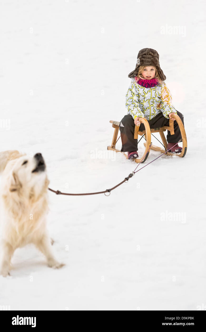 Girl being pulled by dog on toboggan in snow - Stock Image