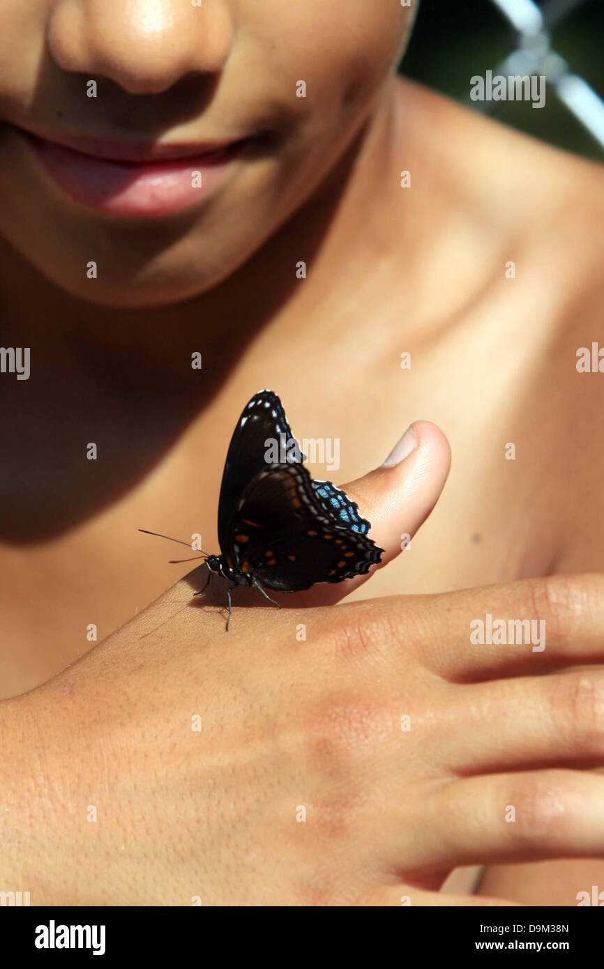 dark skin skinned boy child kid smile smiling with blue black butterfly on hand - Stock Image