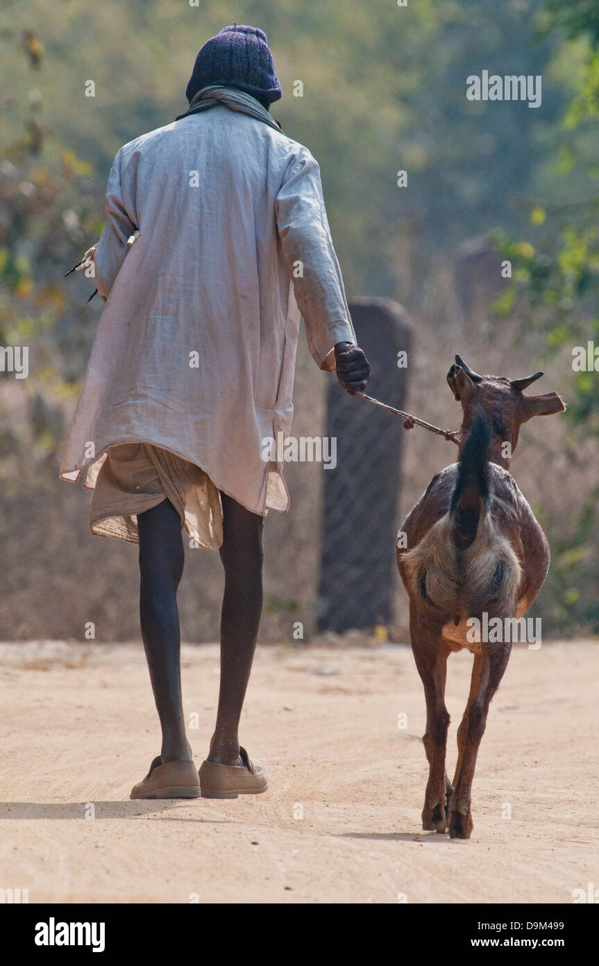 Old Indian woman with goat in northcentral India - Stock Image