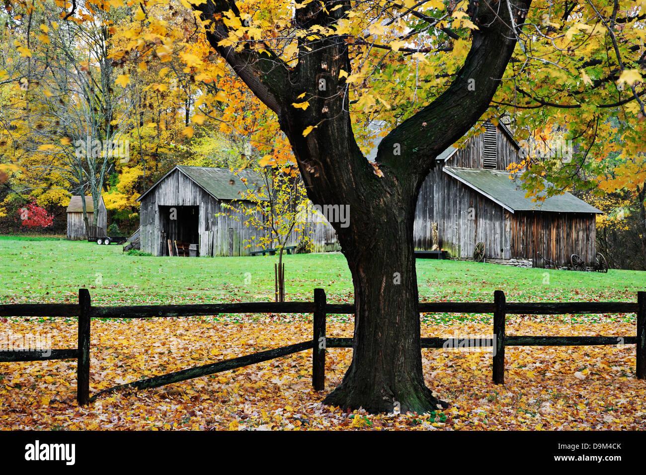 Tree Trunk, Fence And Barn, A Pastoral Autumn Scene, Sharon Woods, Southwestern Ohio, USA - Stock Image