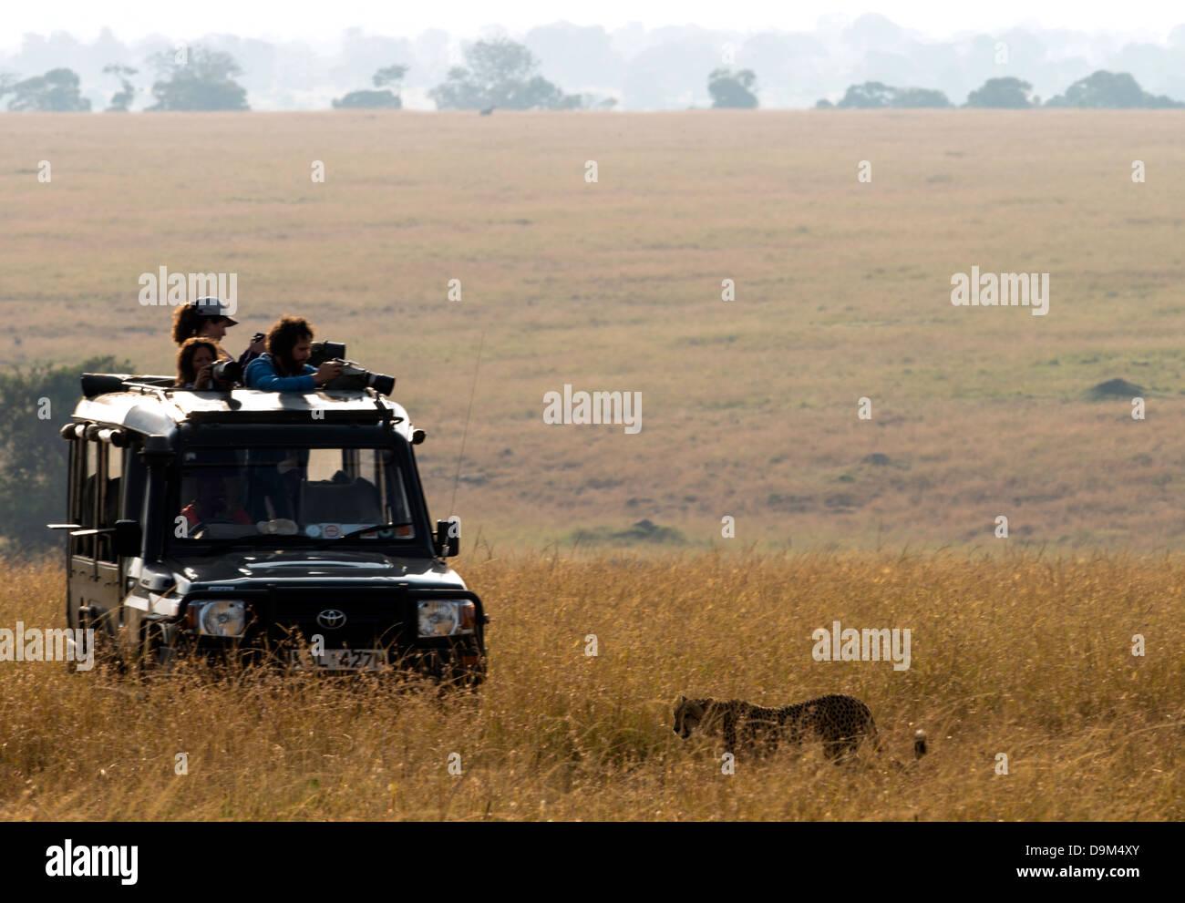 Photographic safari car jeep Kenya Kicheche Masai Mara Africa - Stock Image