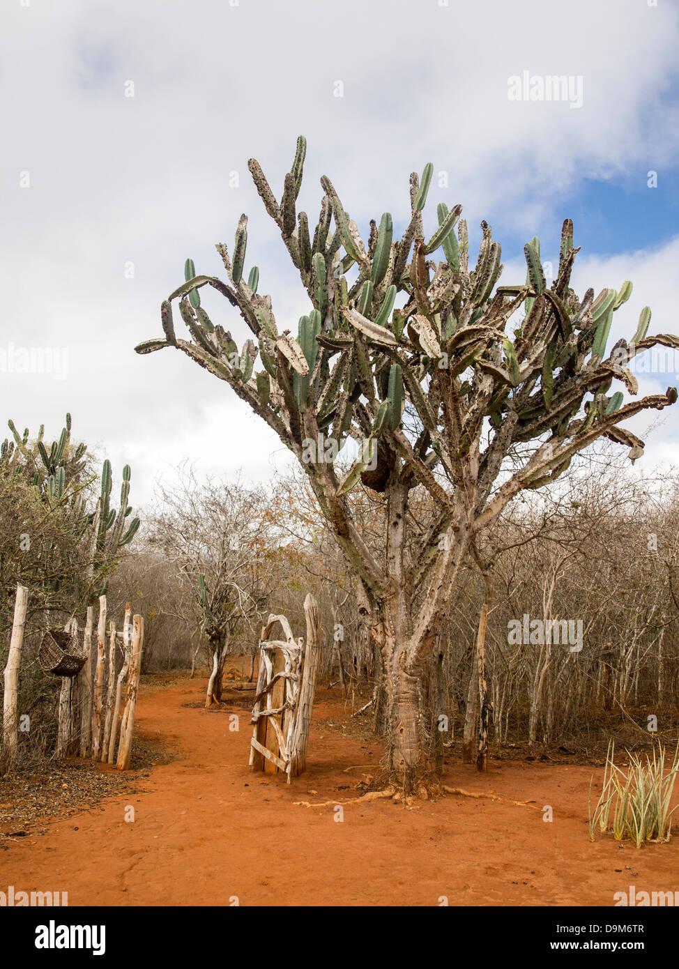 Cactus in Chapada Diamantina National Park in Brazil. - Stock Image