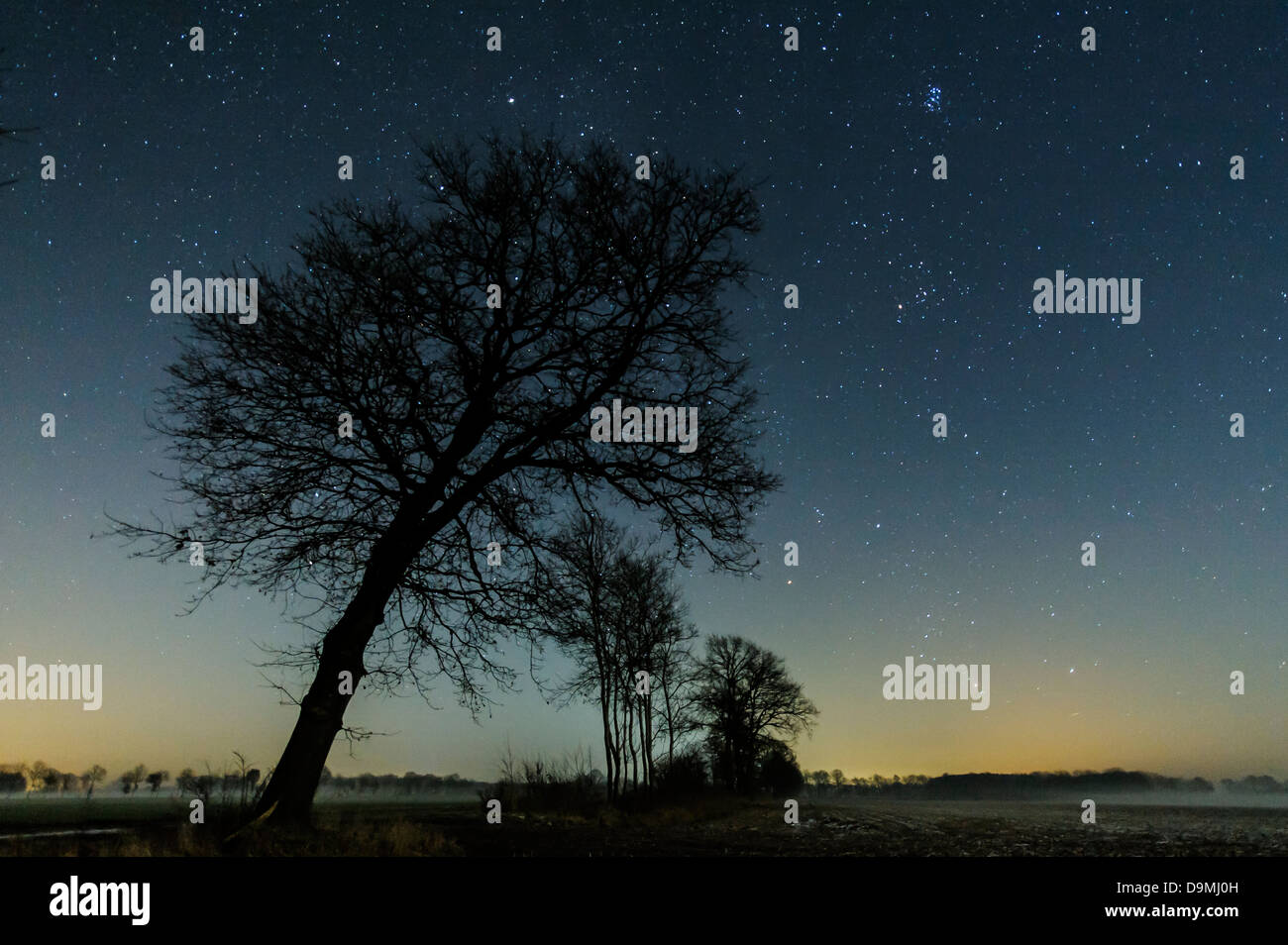 Star sky, stairy, stars, night, tree, scenic Stock Photo