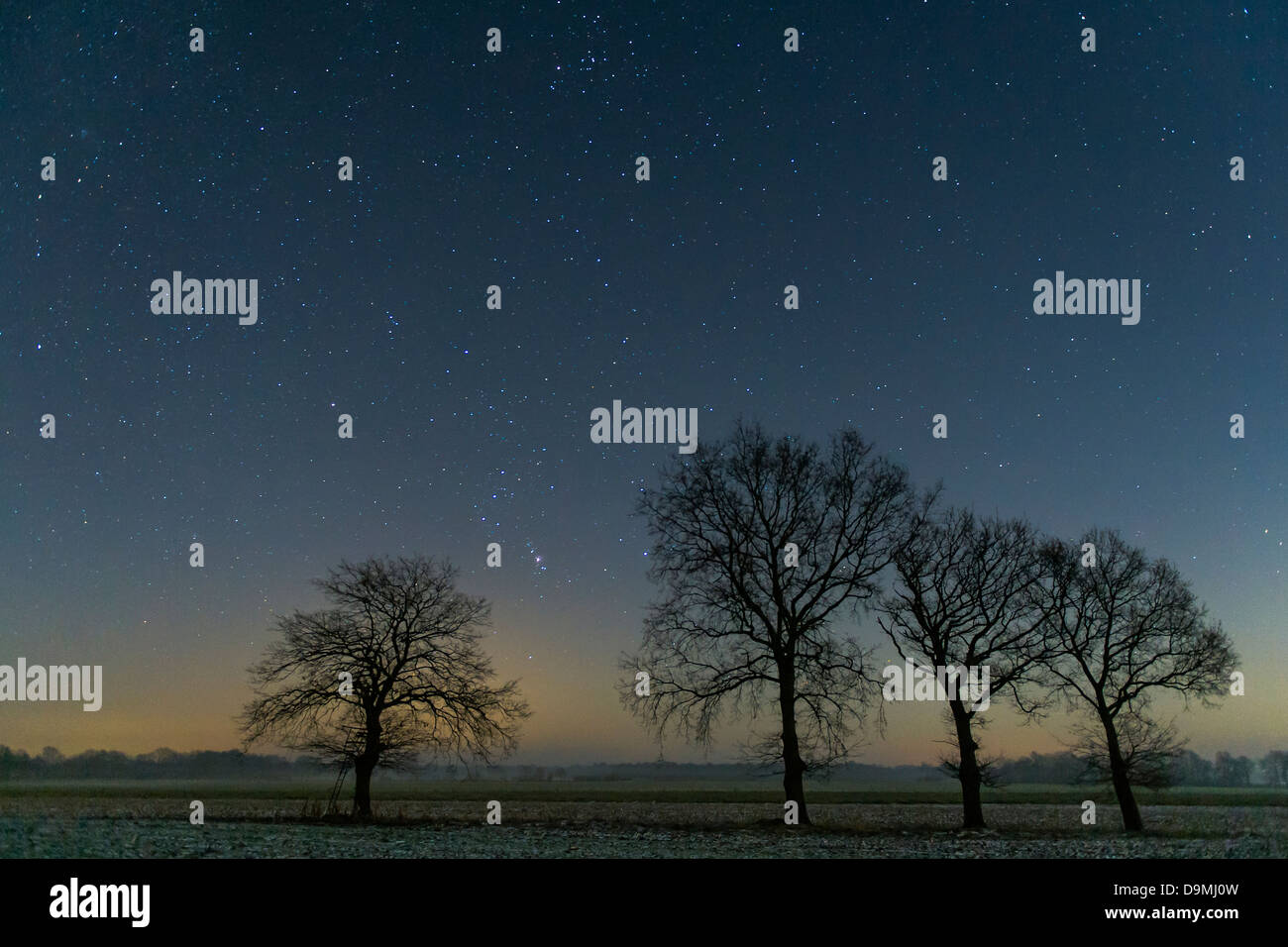 Star sky, stairy, stars, night, tree, scenic - Stock Image
