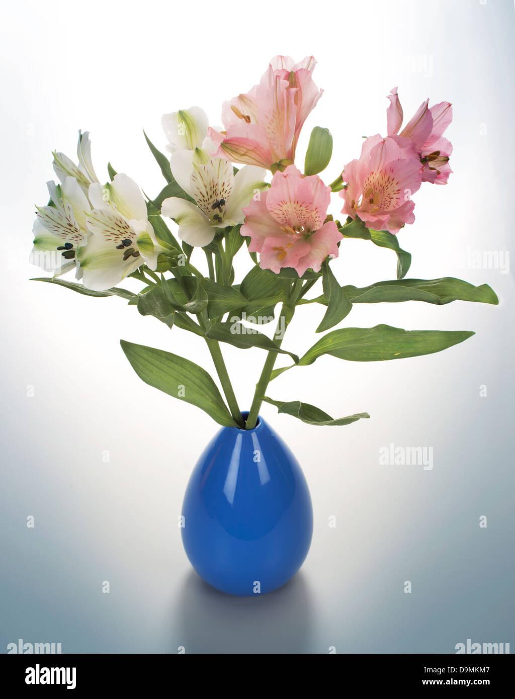 flowers in vase - Stock Image