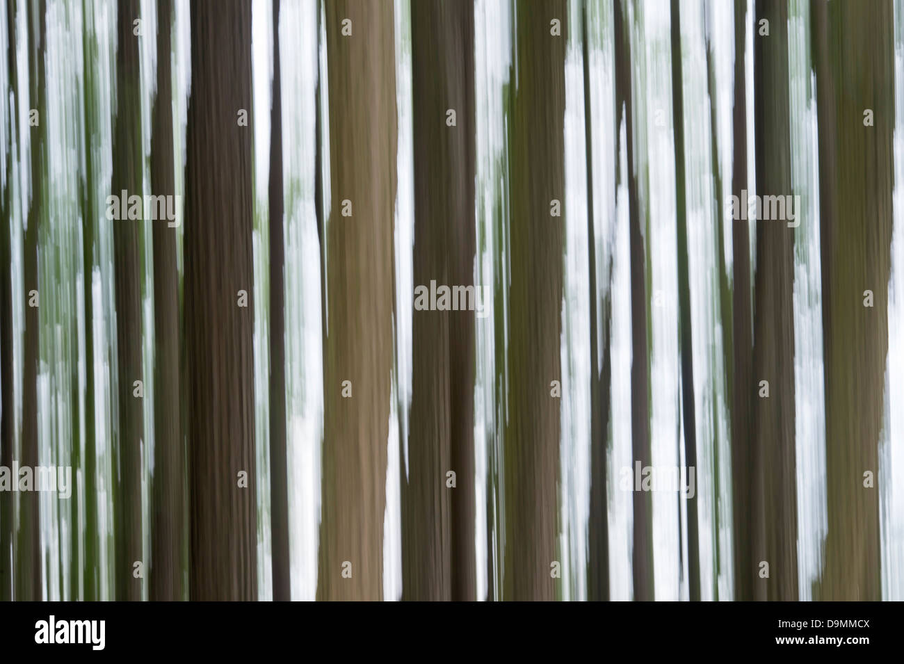 tree, trees, abstract, wood, motion, blur - Stock Image