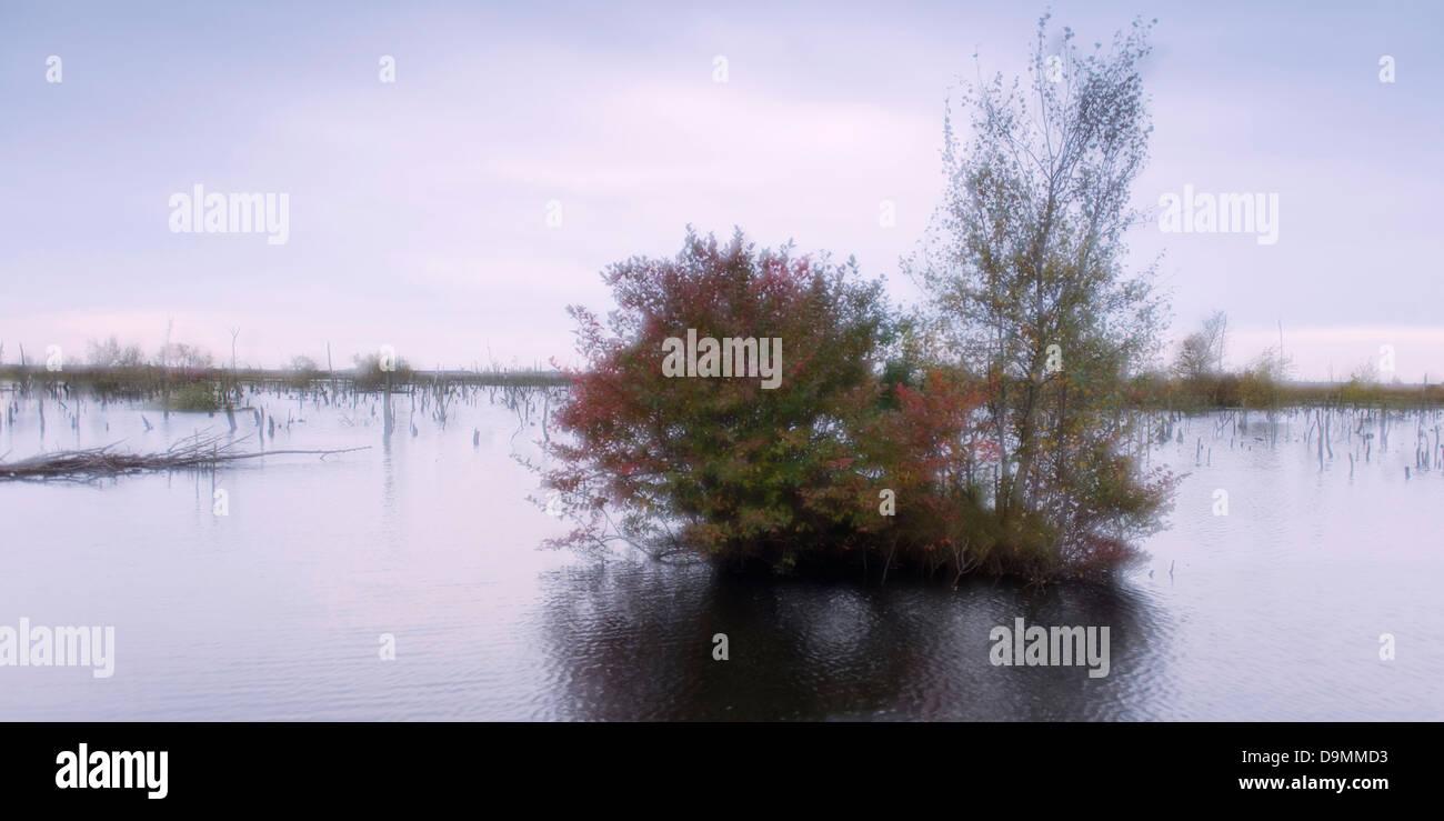 Birch Germany Goldenstedter moor melancholy Lower Saxony marsh width Wiedervernaessung melancholy - Stock Image