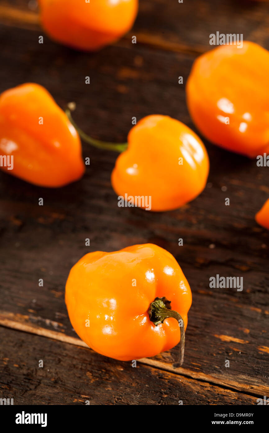 Organic Hot and Spicy Habanero Peppers against a background Stock Photo