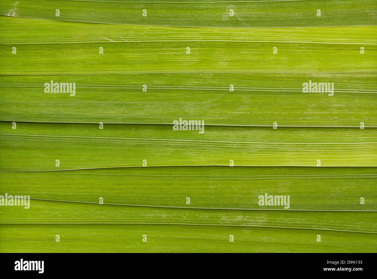 Long leaf detail background great for health spas or relaxing massage rooms - Stock Image