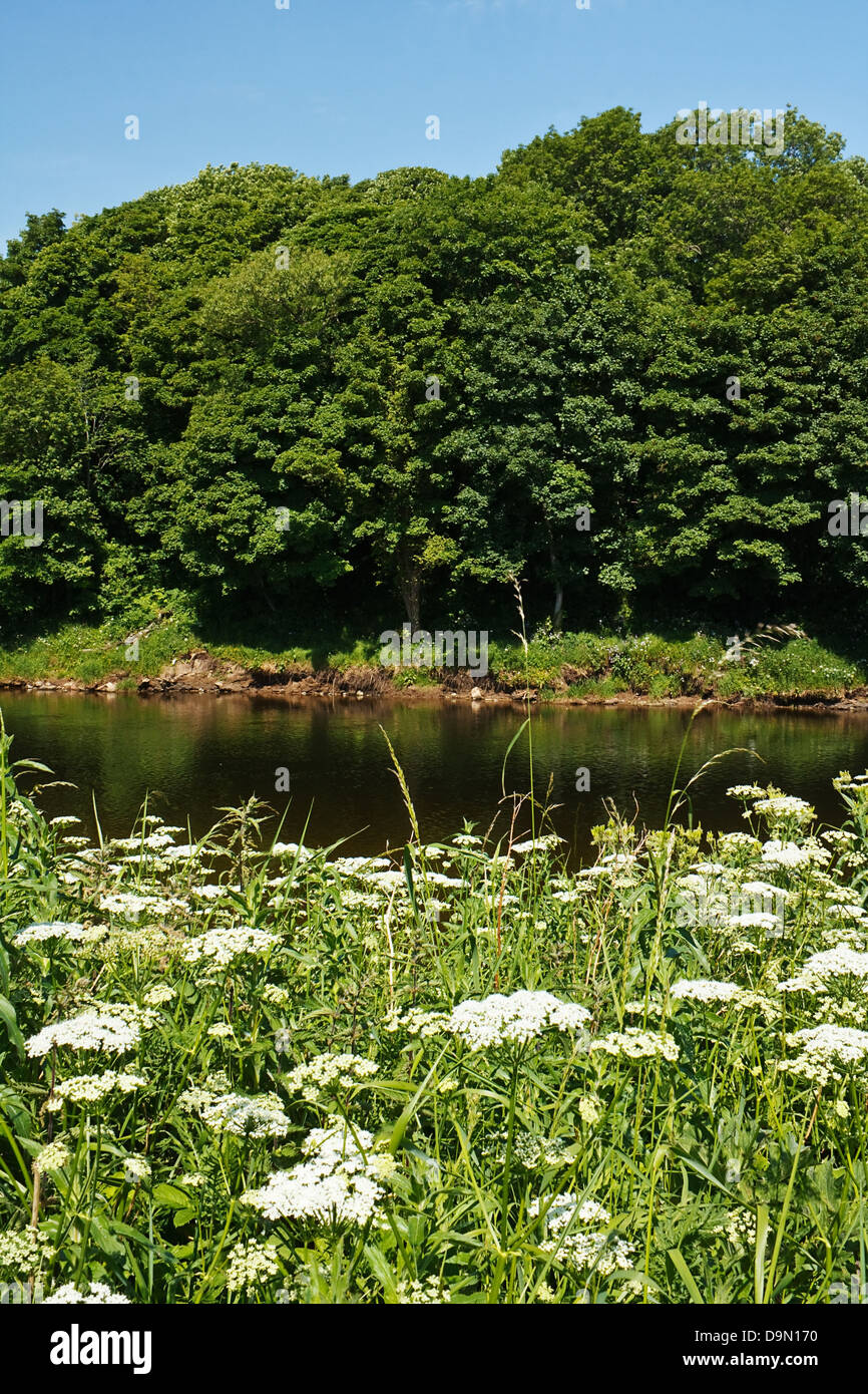 Generic Sunny rural riverbank scene with layers of vegetation a symbol of summer - Stock Image