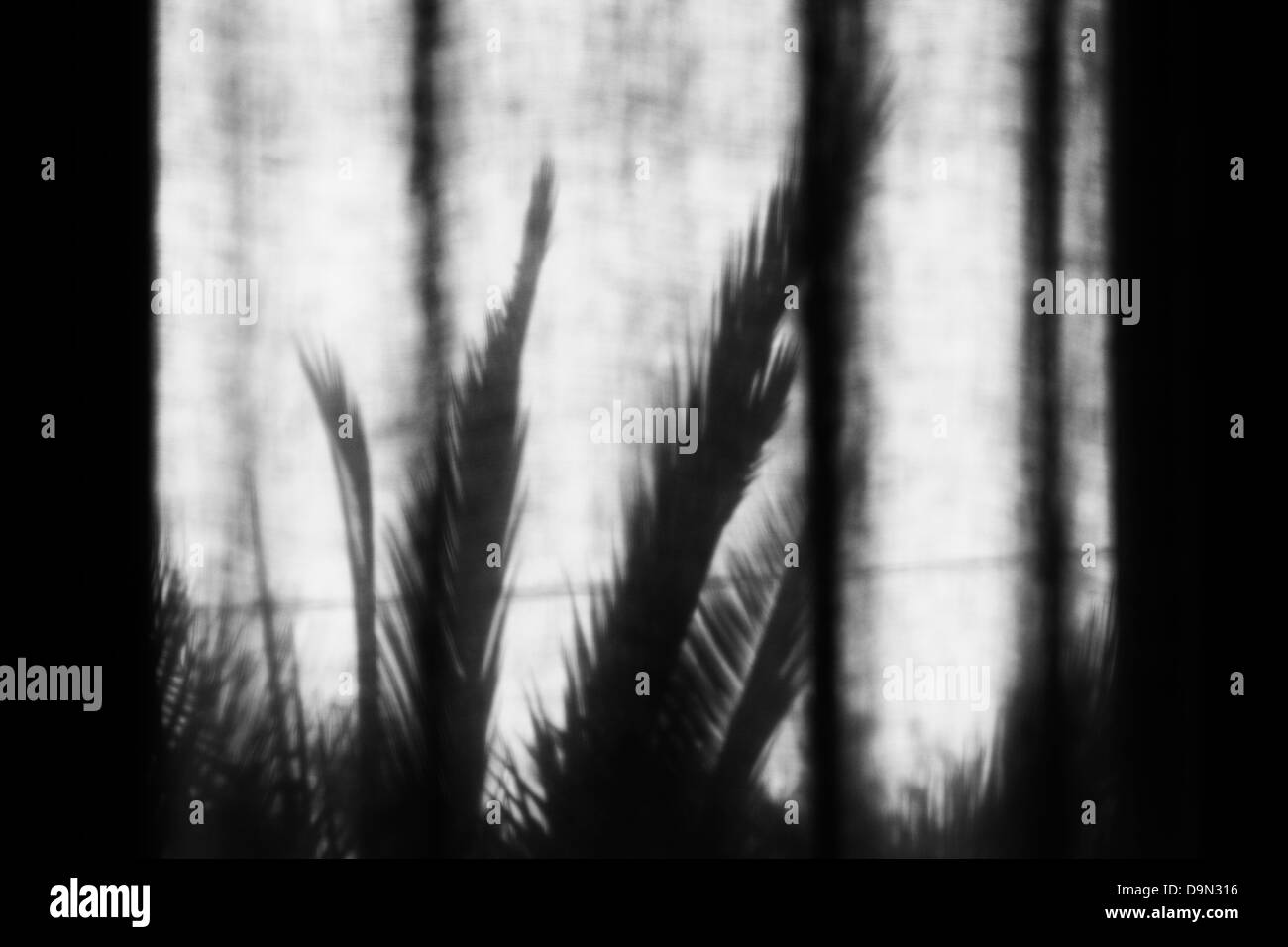 Monochrome image of palm tree shadows on a curtain - Stock Image
