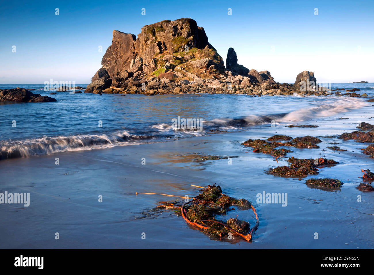 OR01086-00...OREGON - Seaweed and kelp on Rock Beach at the edge of the Pacific Ocean in Harris Beach State Recreation - Stock Image