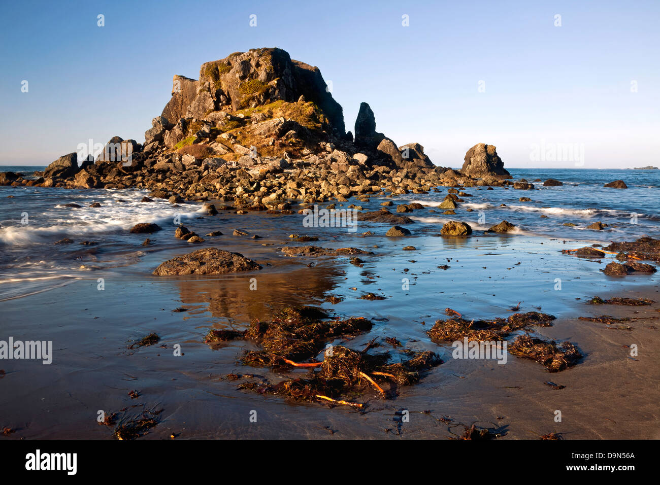 OR01088-00...OREGON - Seaweed and kelp on Rock Beach at the edge of the Pacific Ocean in Harris Beach State Recreation - Stock Image