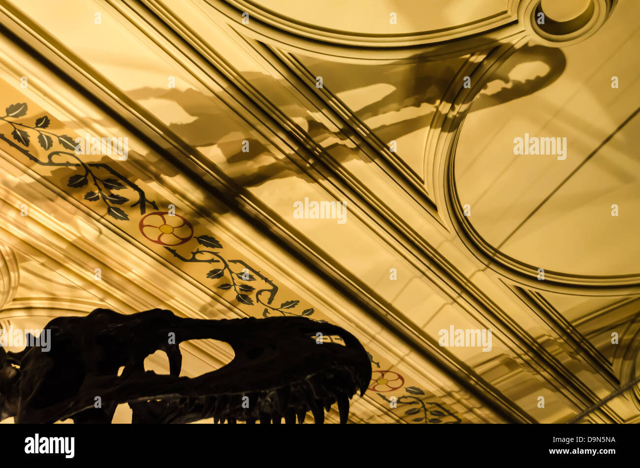 Dinosaur skeleton casting a shadow on the ceiling of the Natural History Museum. London, England. - Stock Image