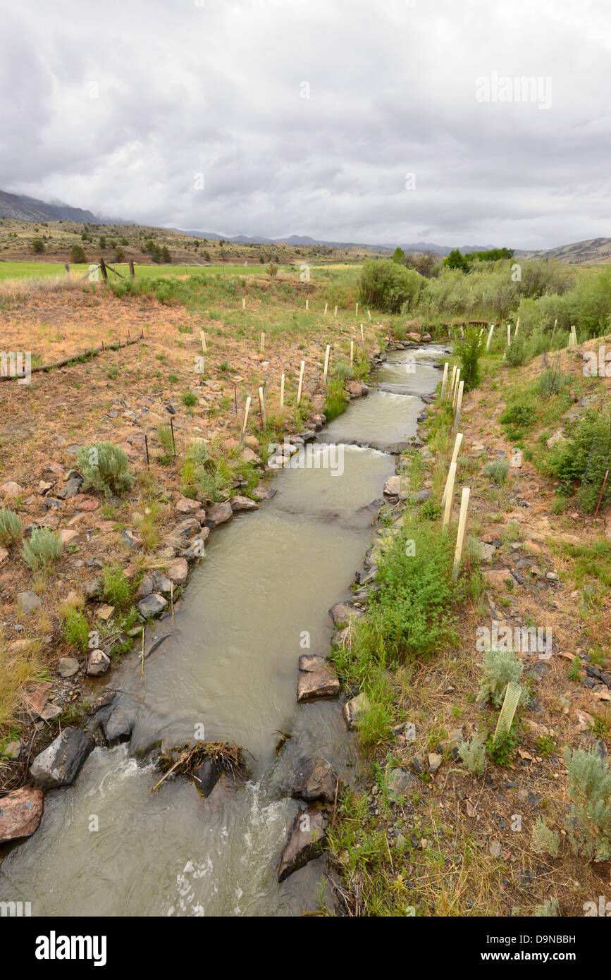 Riparian restoration project on Bridge Creek, John Day Fossil Beds National Monument, Oregon. - Stock Image