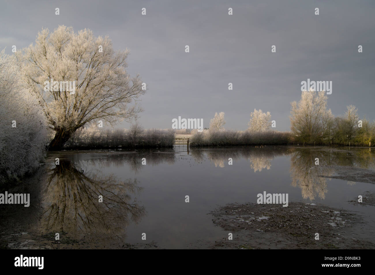 UK, England, Gloucestershire, River Thames at Waterhay, winter flood - Stock Image