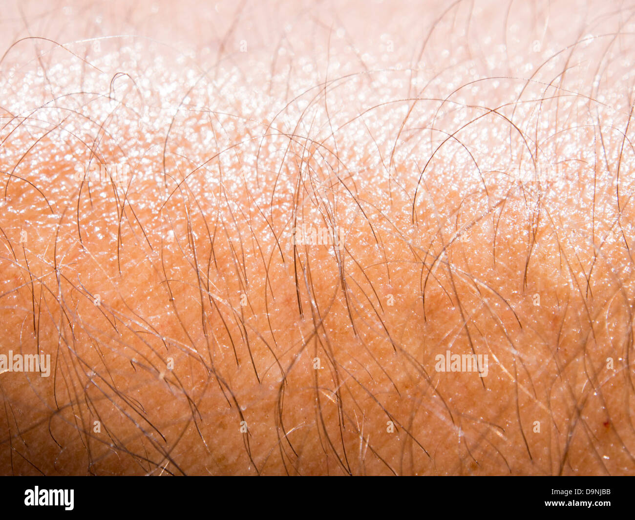 Sweat on a mans arm. - Stock Image