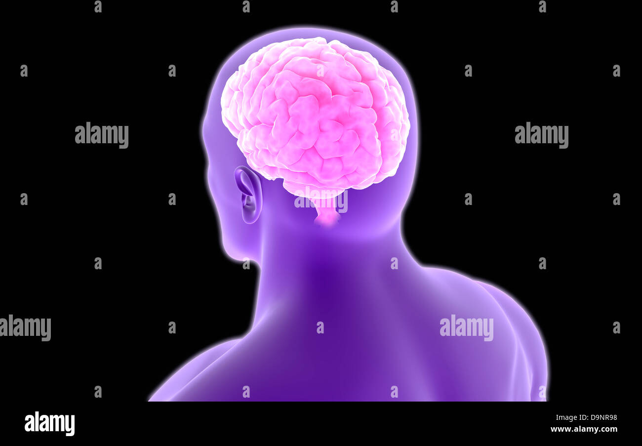 Conceptual image of human brain. - Stock Image