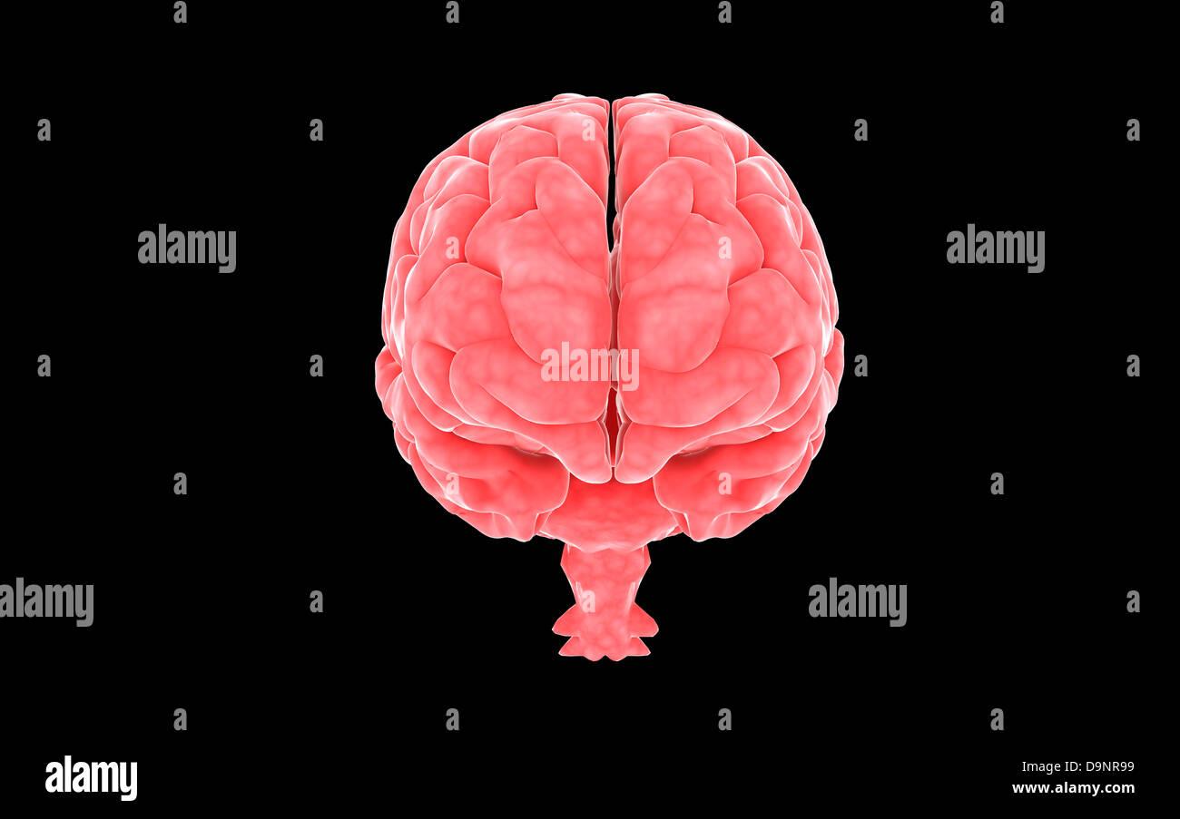 Conceptual image of human brain. - Stock Image