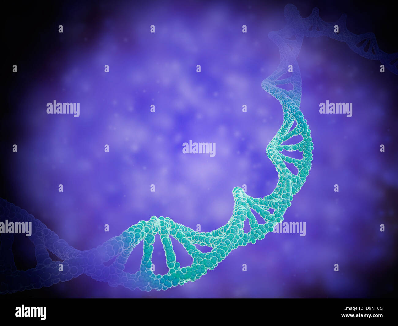 Stylized view of strands of human DNA or deoxyribonucleic acid. - Stock Image