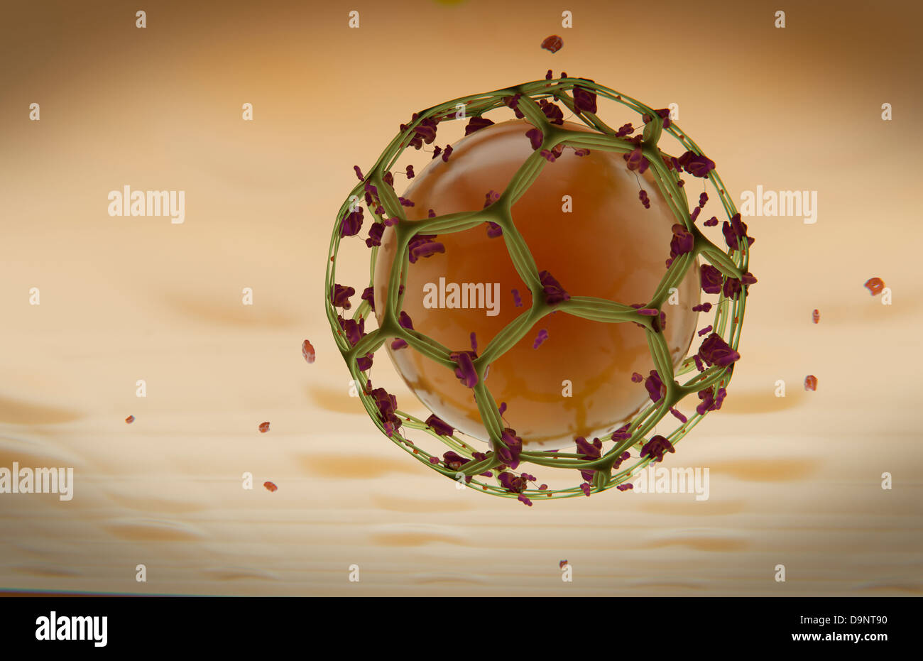 Clathrin Mediated Endocytosis Stock Photo