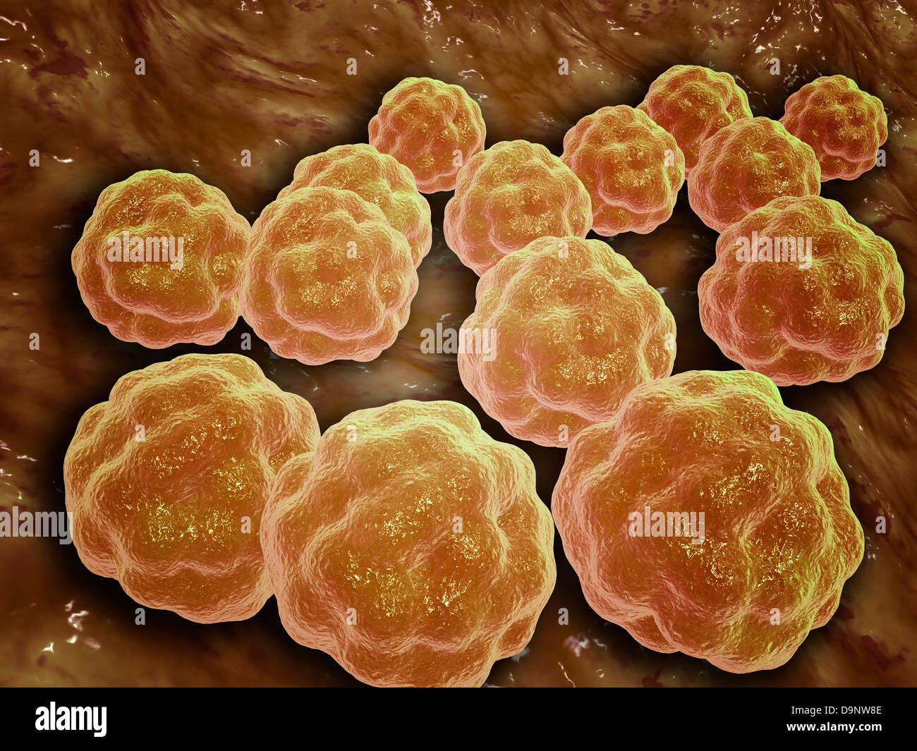Microscopic view of Rubella virus - Stock Image