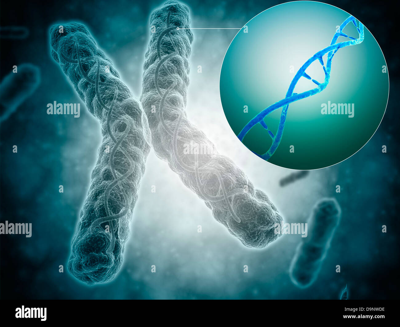 Conceptual image of a telomere showing DNA structure. - Stock Image