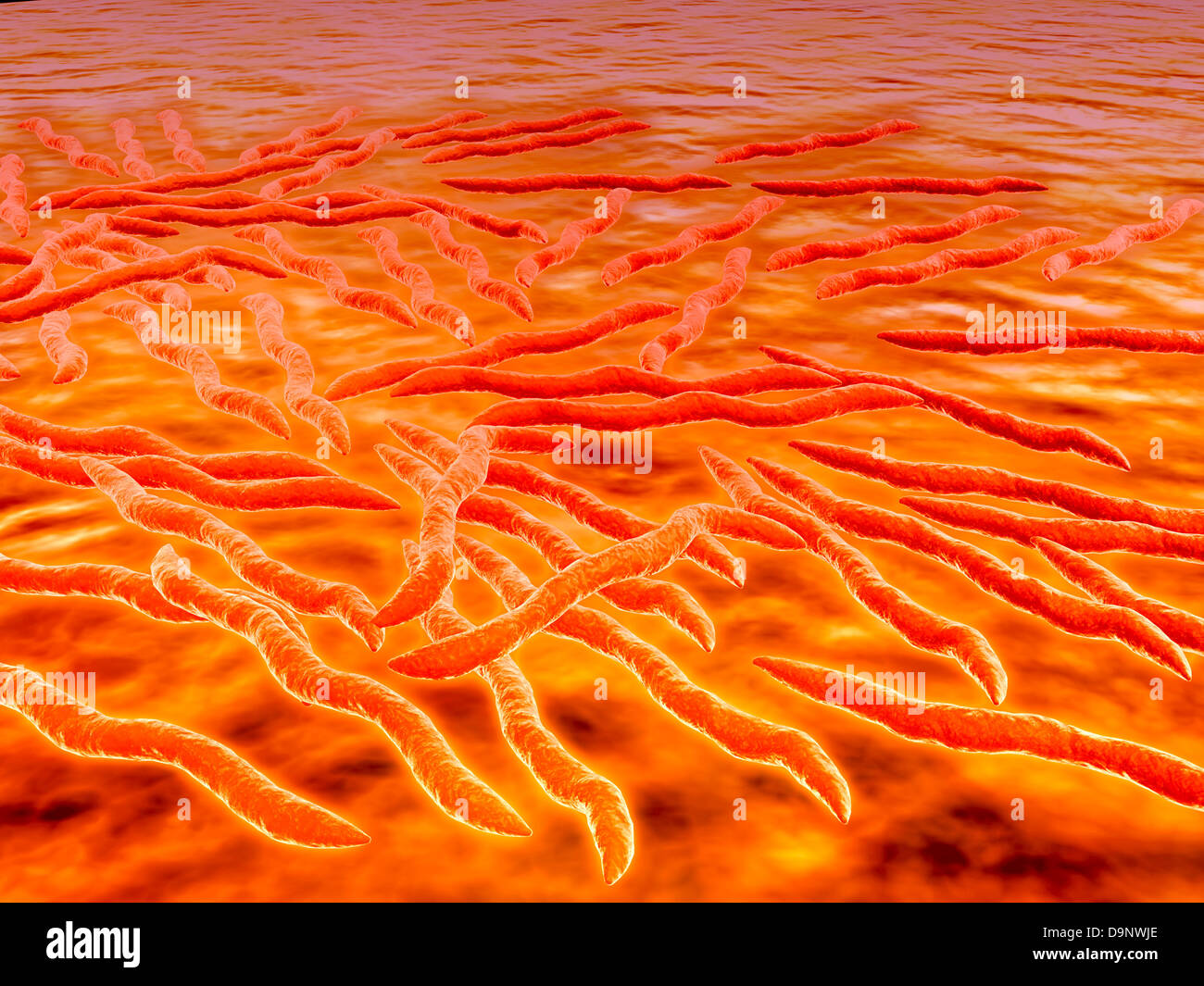 Microscopic view of a group of Borrelia burgdorferi, the bacterial agent of Lyme disease transmitted by ticks. - Stock Image