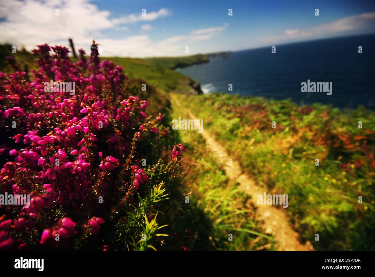 British coastal path Stock Photo