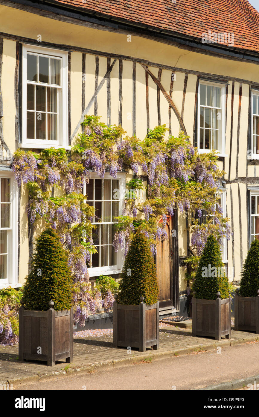Wisteria floribunda growing around a picturesque yellow timbered house front in historic village of Lavenham, Suffolk, - Stock Image
